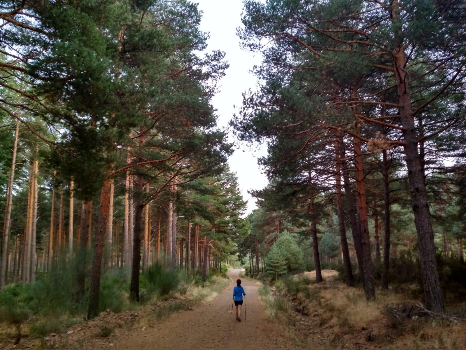 pilar-gil-bosque