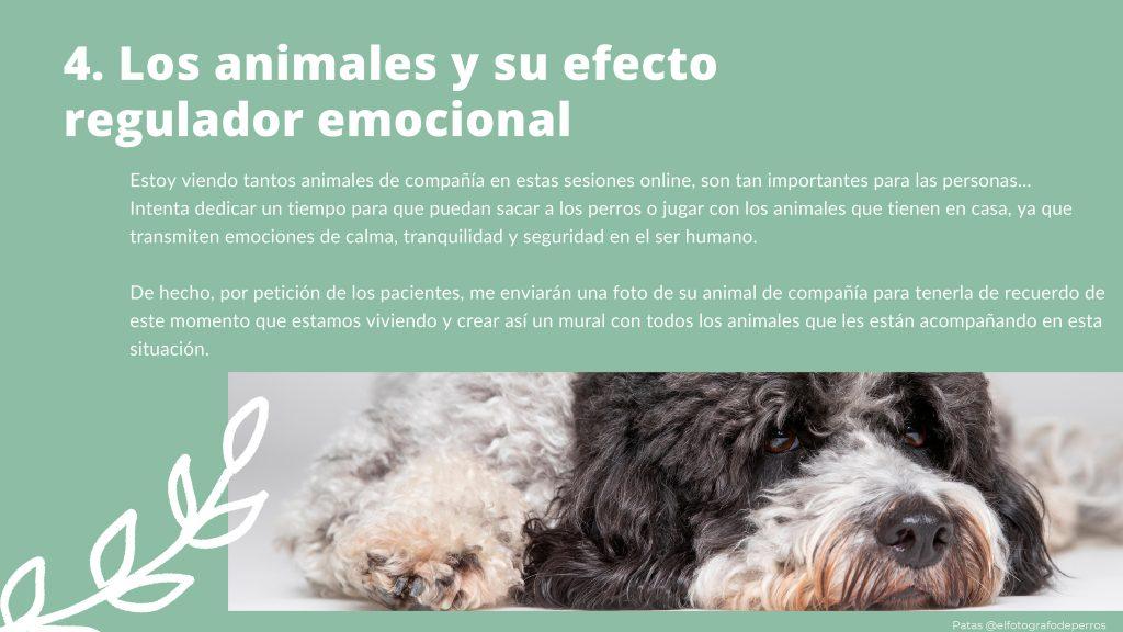 Los animales y su efecto regulador emocional. Terapia online. Terapiayemoción